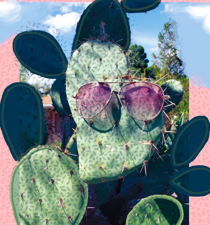 An image of a cool cactus, with rose colored aviators.
